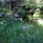Rivington-June14