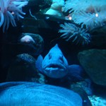 sealife-centre-2014-blackpool