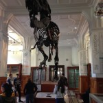 T-Rex Skeleton Manchester Museum